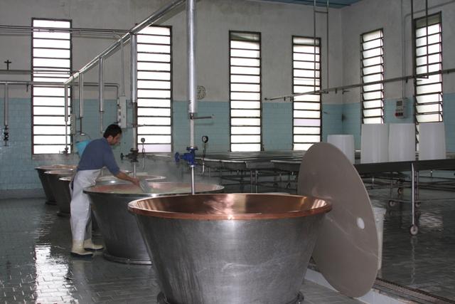 Milk Trays