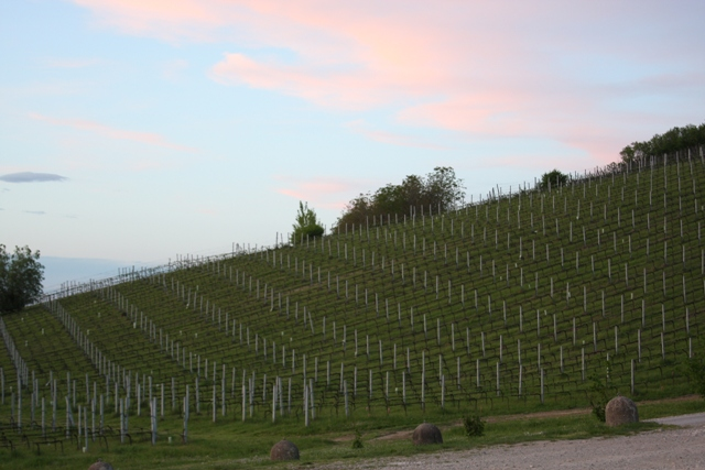 Vineyards in waiting