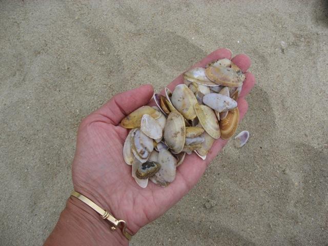 Not just any Seashell