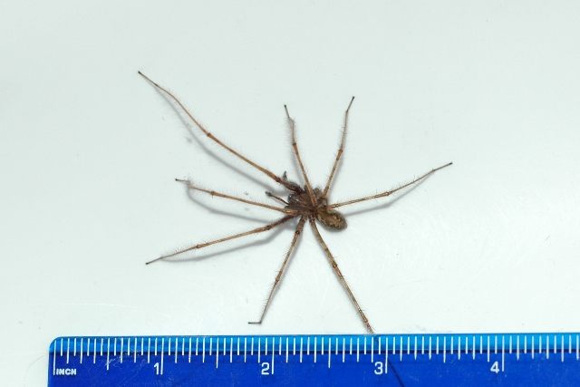 KB Spider II