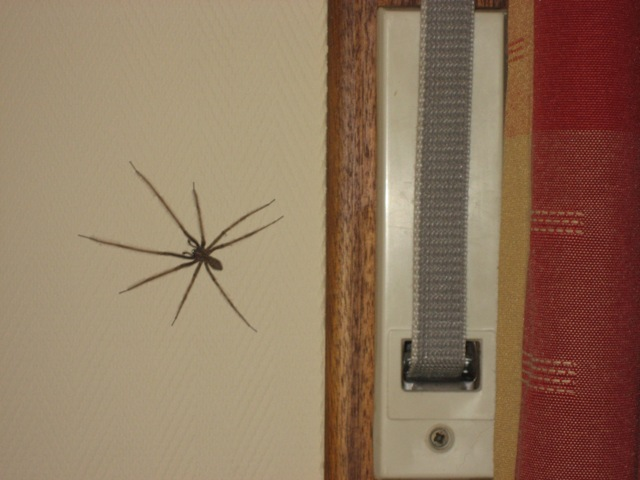2nd Spider in my bedroom