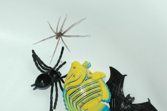 KB Spider