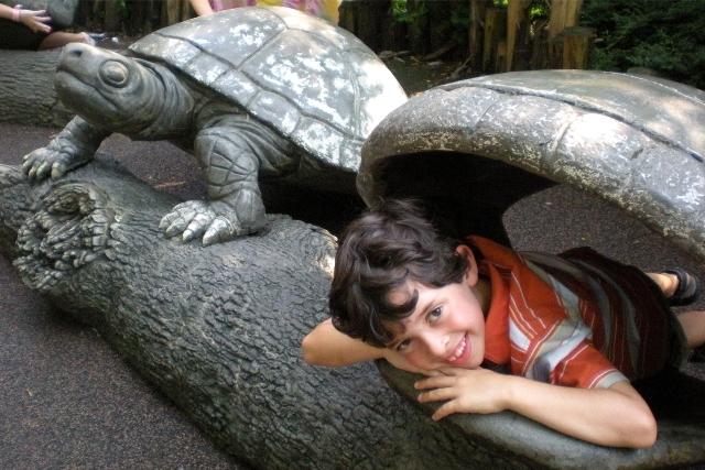 C inside turtle