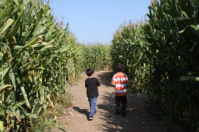 Walking through the maze
