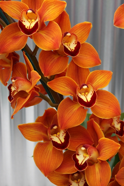 Flaming Orchid