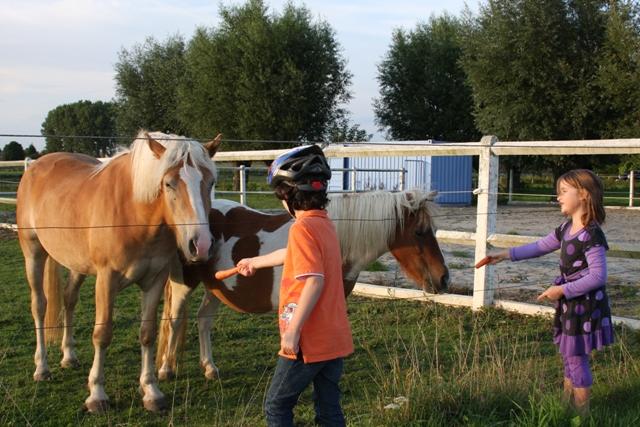 Feeding more horses