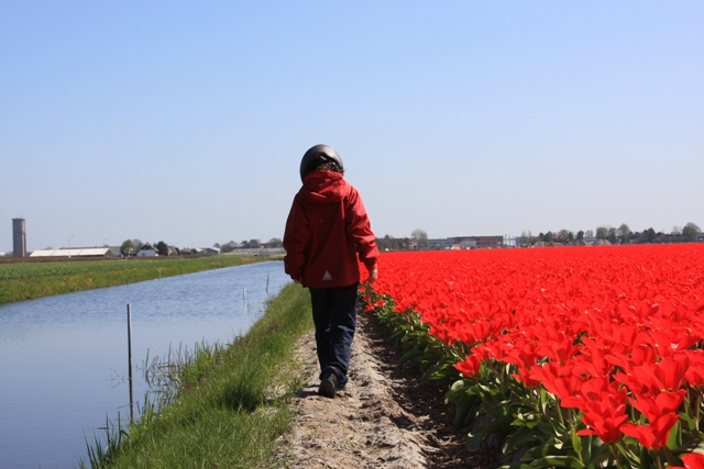 C walking near tulip fields
