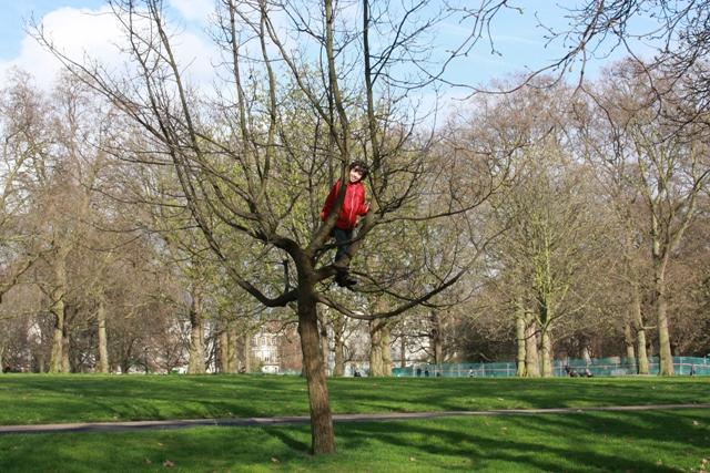 Climbing Tree