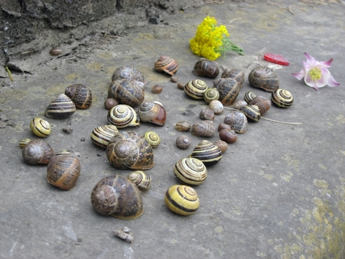 Snail_party