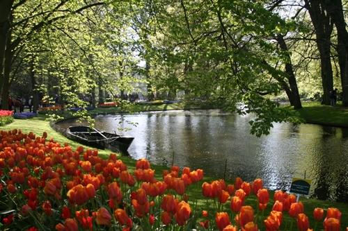 Keukenhof_gardens_ii