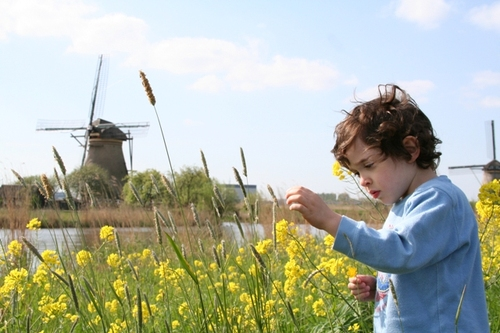 Picking_wild_flowers_at_kinderdij_5