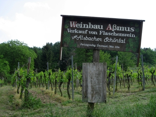 Alsbach_vineyard