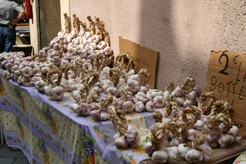 Garlic_display_2