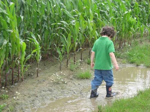 Fun_puddles
