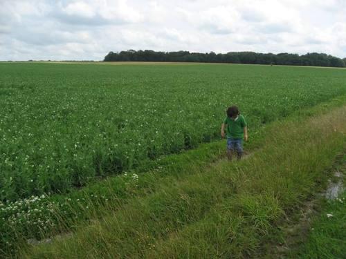 On_the_farm