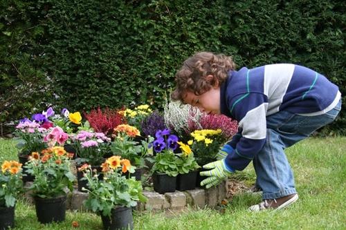 Planting_a_rainbow_garden